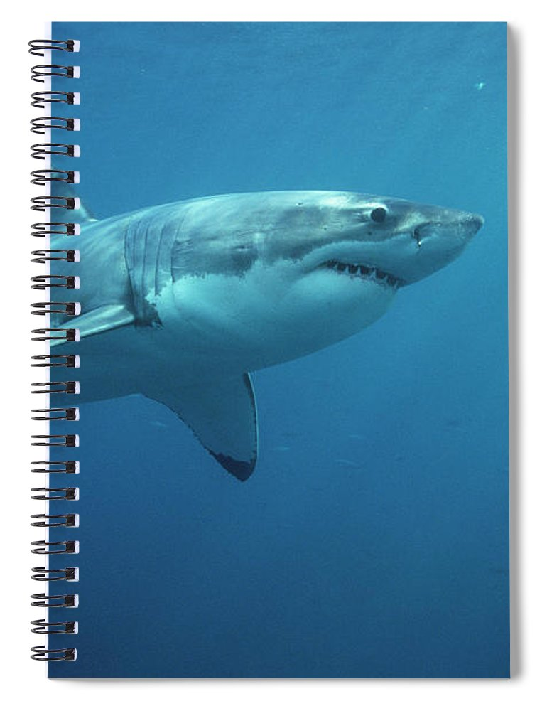 Mp Spiral Notebook featuring the photograph Great White Shark Carcharodon by Mike Parry