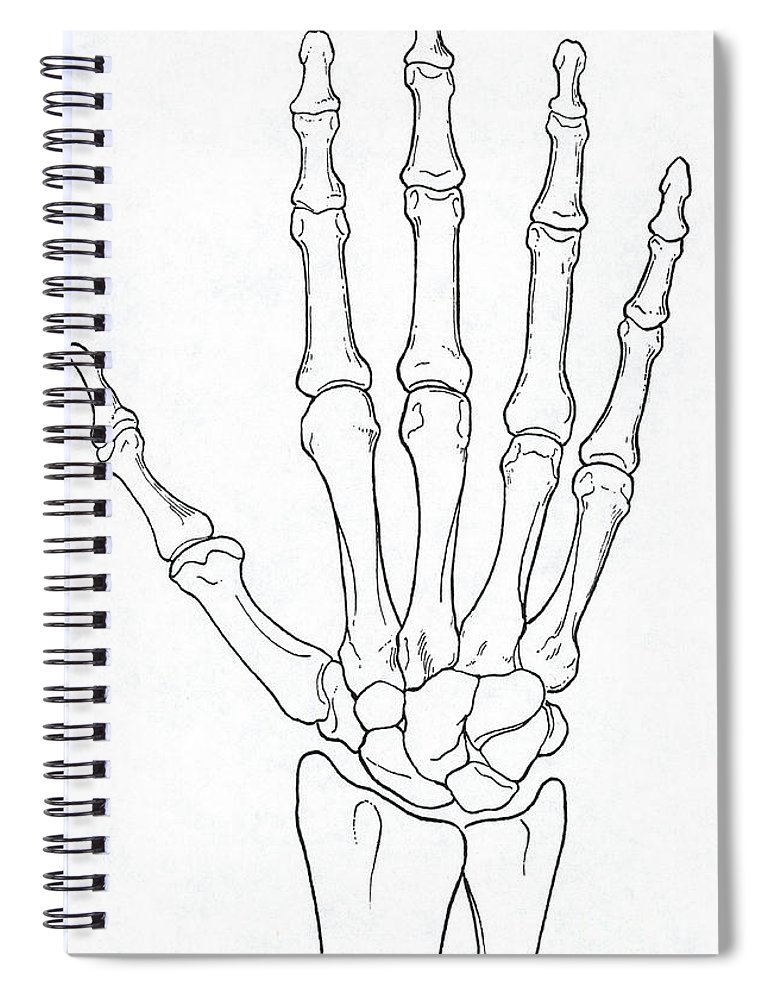 Hand And Wrist Bones Spiral Notebook For Sale By Science Source