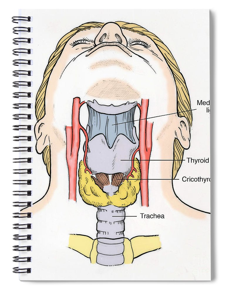 Illustration Of Throat Anatomy Spiral Notebook For Sale By Science