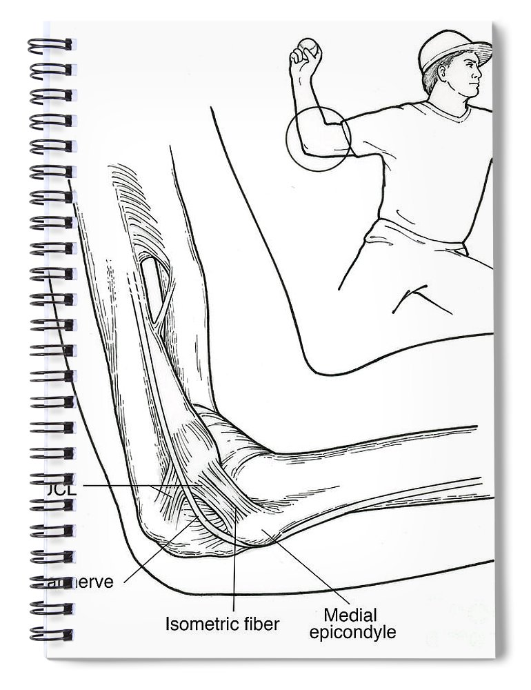 Illustration Of Elbow Ligaments Spiral Notebook for Sale by Science ...