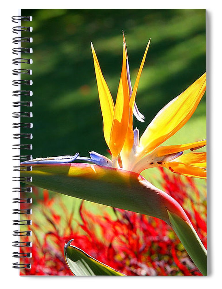 Flower Spiral Notebook featuring the photograph Bird Of Paradise by Diana Haronis