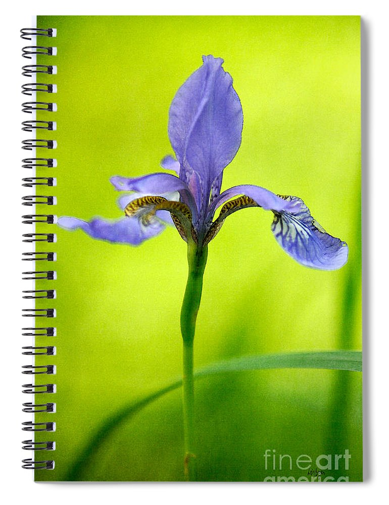 Iris Spiral Notebook featuring the photograph Blue Japanese Iris by Lois Bryan
