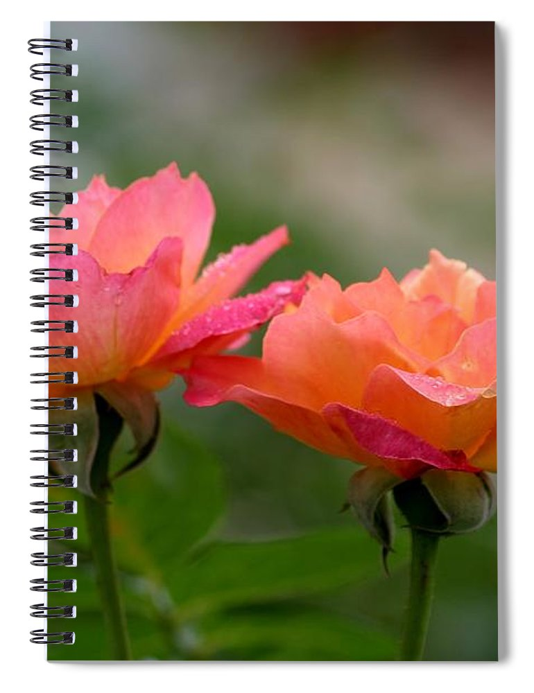 Roses Spiral Notebook featuring the photograph Broadway by Living Color Photography Lorraine Lynch