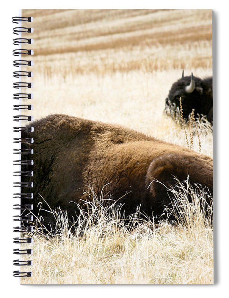 Utah Spiral Notebook featuring the photograph Buff And Friend 2 by Marilyn Hunt