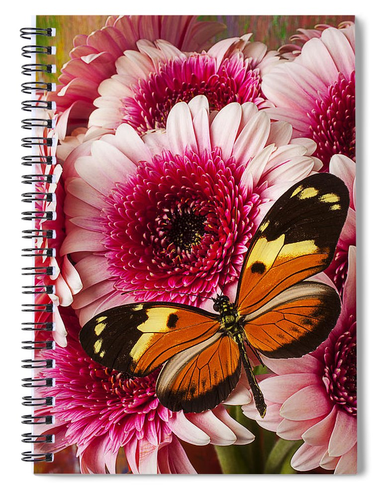 Butterfly Eduador Pichincha Tinalandia Spiral Notebook featuring the photograph Butterfly On Pink Mum by Garry Gay