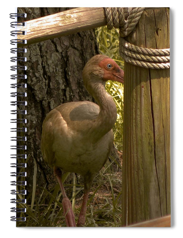 Bird Spiral Notebook featuring the photograph Cagney by Trish Tritz