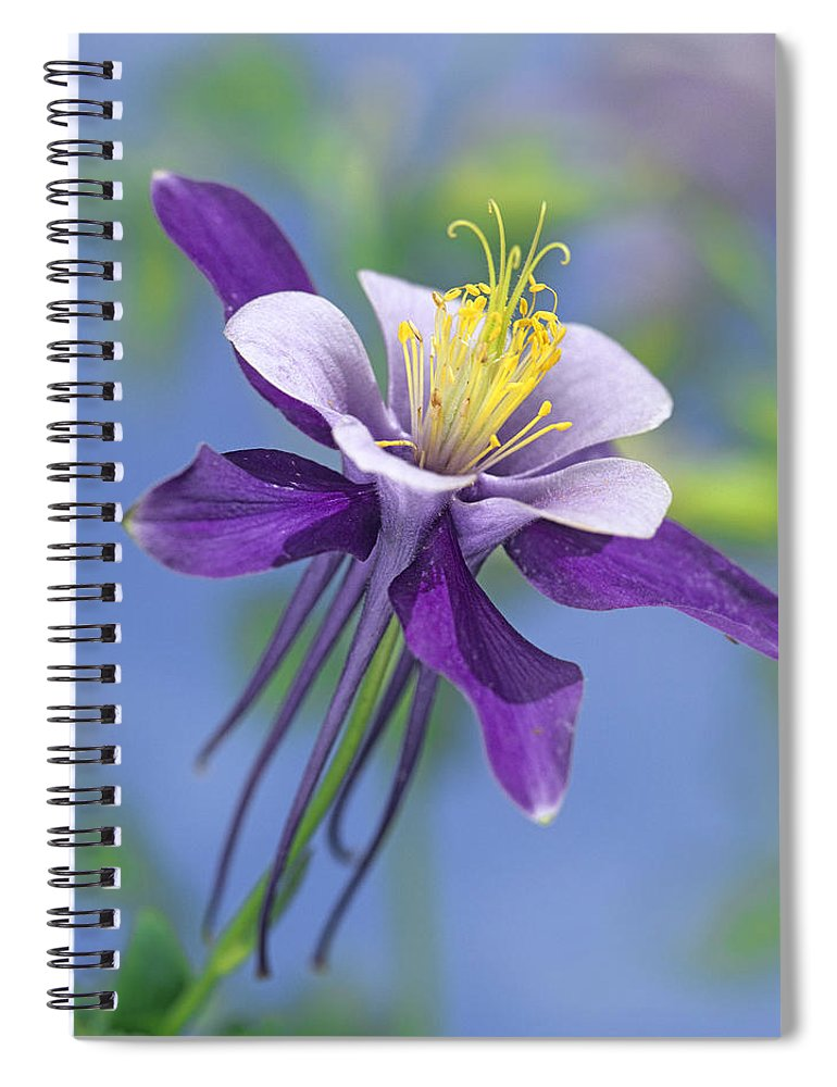 00176669 Spiral Notebook featuring the photograph Colorado Blue Columbine Close by Tim Fitzharris