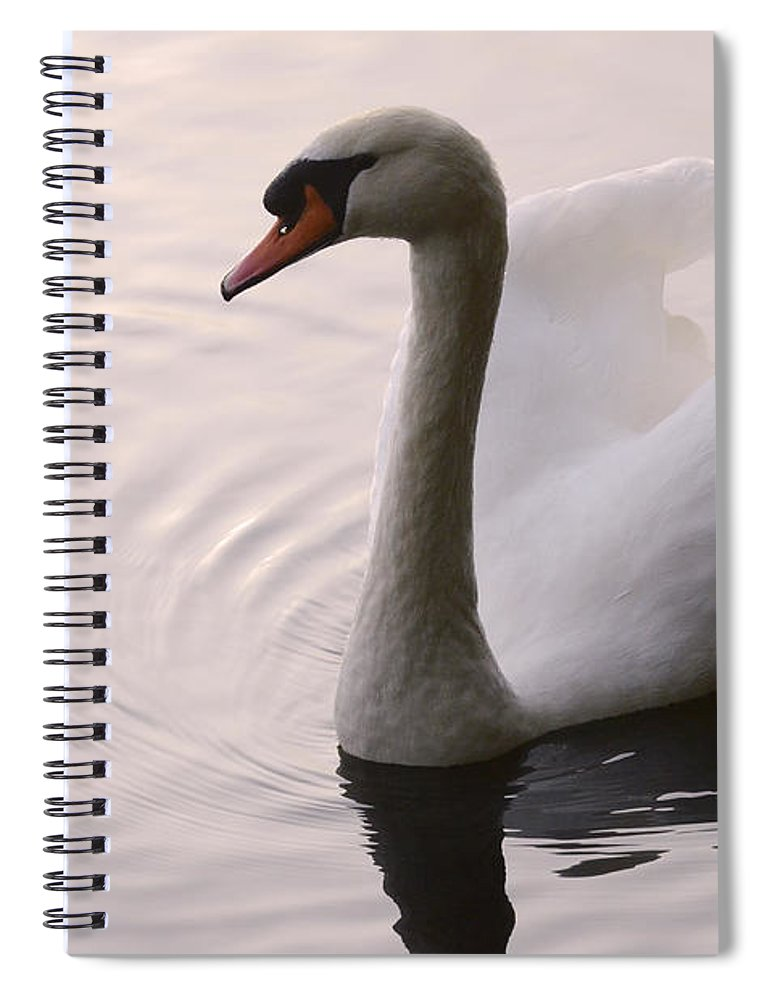 Swan Spiral Notebook featuring the photograph Completely Elegant by Bob Christopher