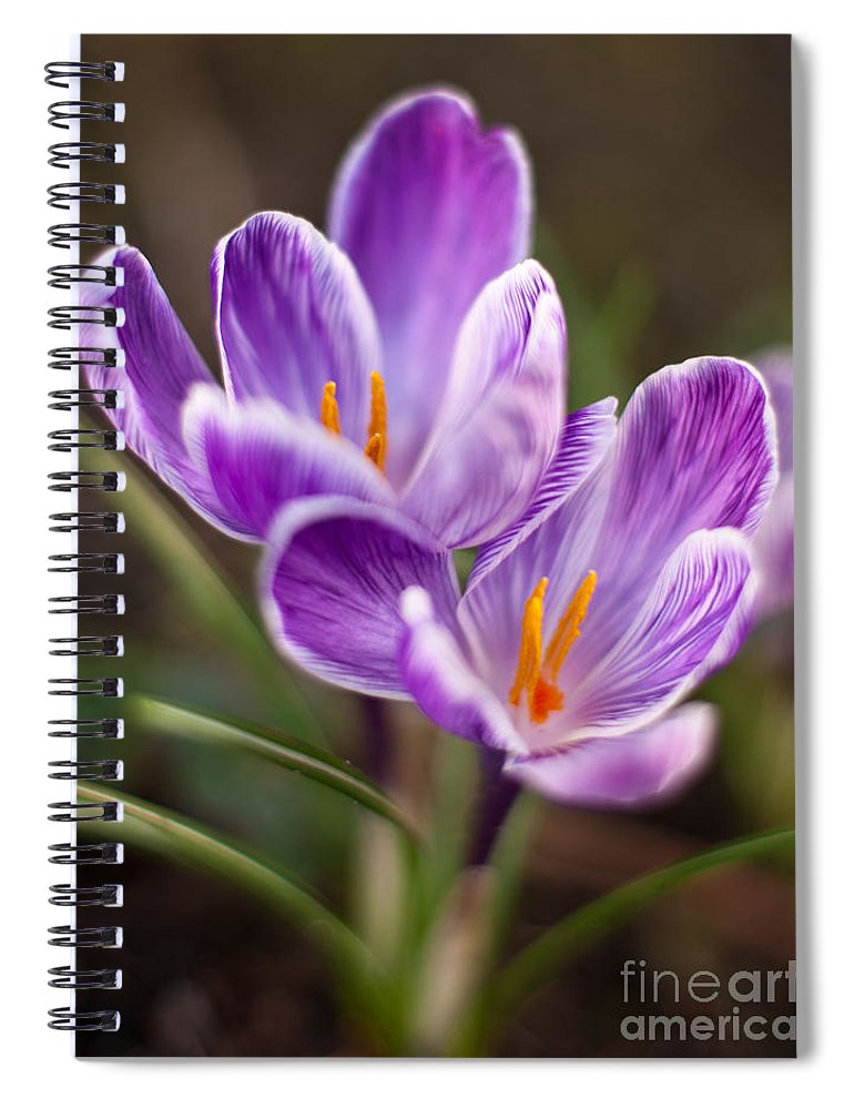 Crocus Spiral Notebook featuring the photograph Crocus Spring by Mike Reid
