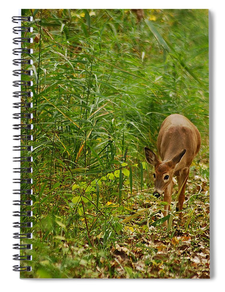 Deer Spiral Notebook featuring the photograph Curious Doe 9838 by Michael Peychich