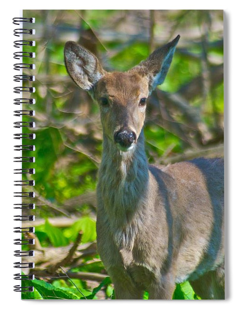 Animal Spiral Notebook featuring the photograph Deer 4824 by Michael Peychich