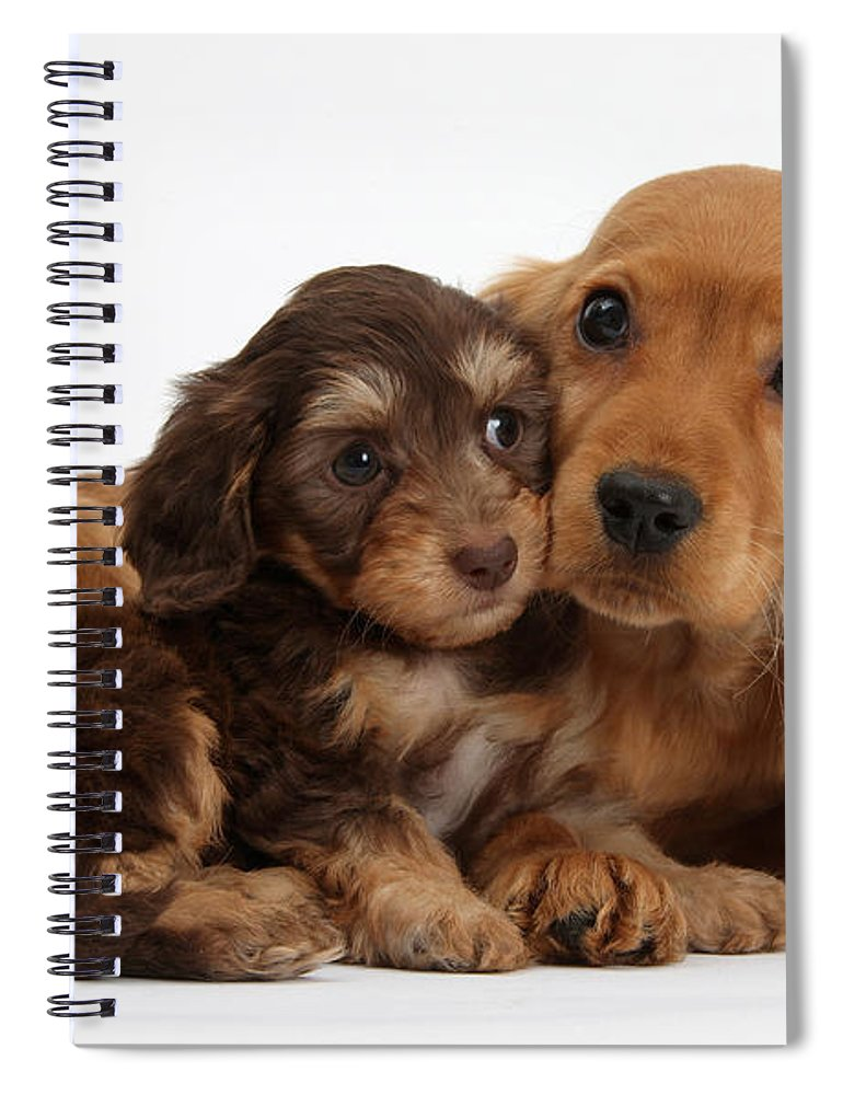 Doxie-doodle & Cocker Spaniel Pups Spiral Notebook
