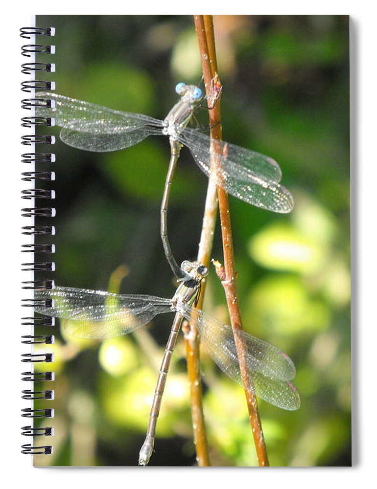 Dragonflies Spiral Notebook featuring the photograph Dragonflies by Paulina Roybal