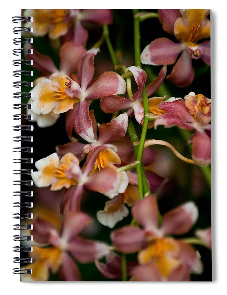 Flower Spiral Notebook featuring the photograph Emma's Orchid by Trish Tritz