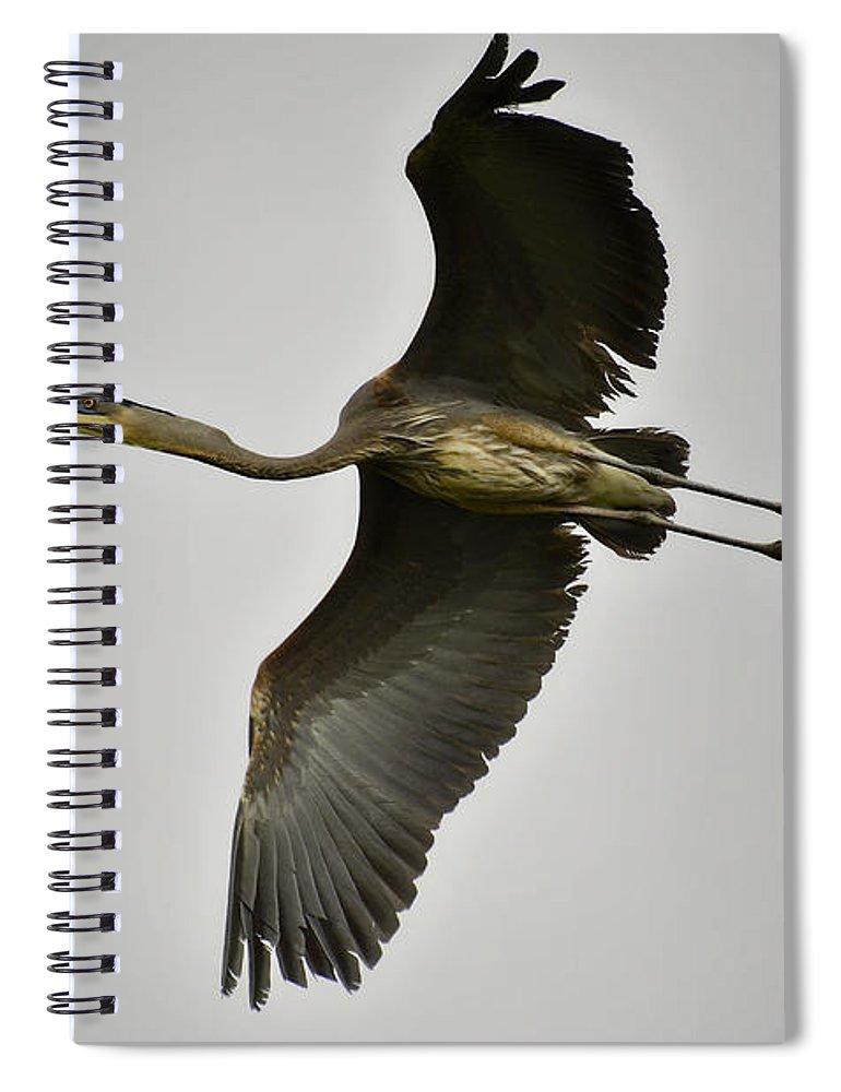Great Blue Heron Spiral Notebook featuring the photograph Flight Of The Great Blue Heron by Saija Lehtonen