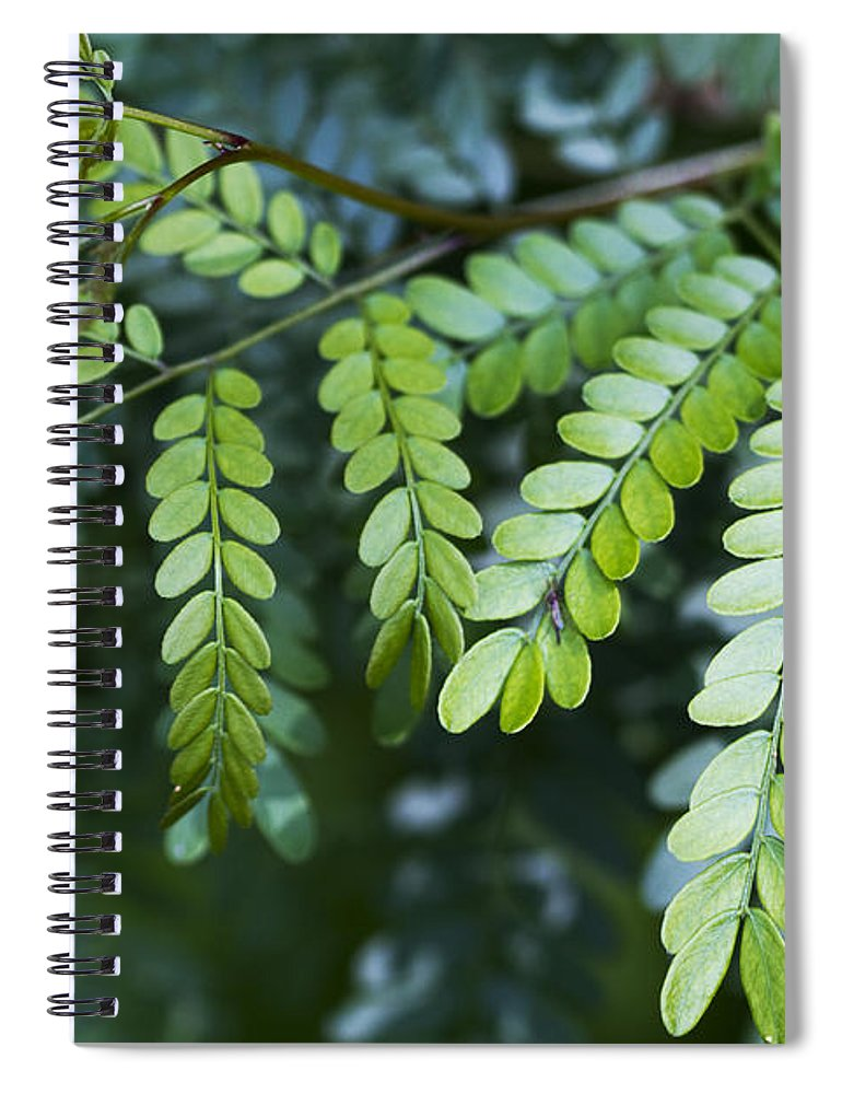 Green Spiral Notebook featuring the photograph Green by Kathy Clark