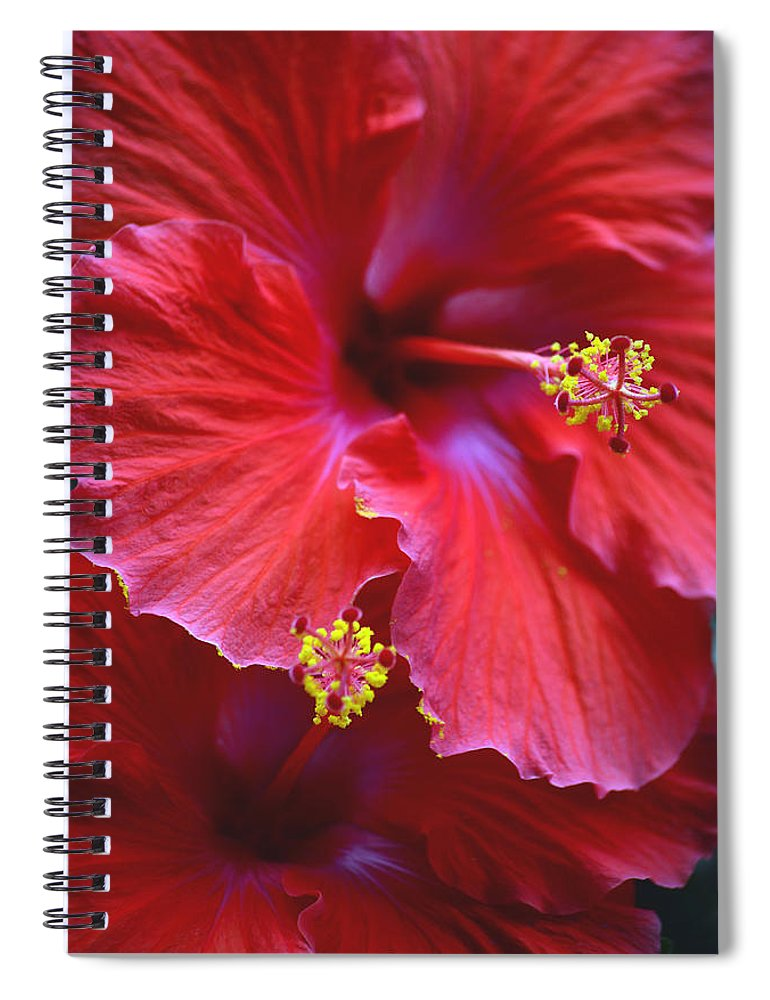 Hibiscus Spiral Notebook featuring the photograph Hibiscus Duo by Sandi OReilly