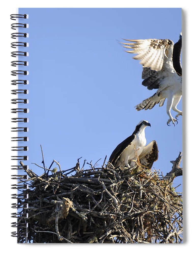 Osprey Spiral Notebook featuring the photograph Honey I'm Home by Christine Stonebridge