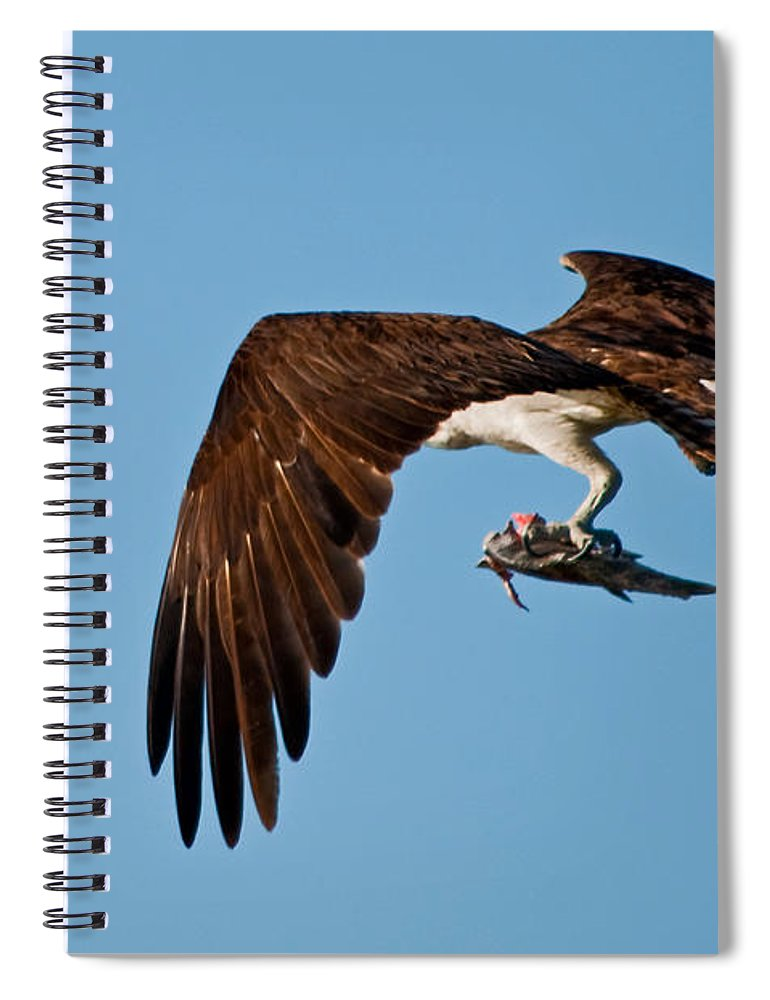 Osprey Spiral Notebook featuring the photograph I Picked Up Take-Out by Christine Stonebridge