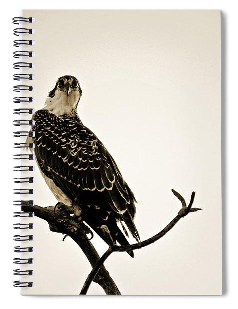 Osprey Spiral Notebook featuring the photograph iSpy Osprey by Christine Stonebridge