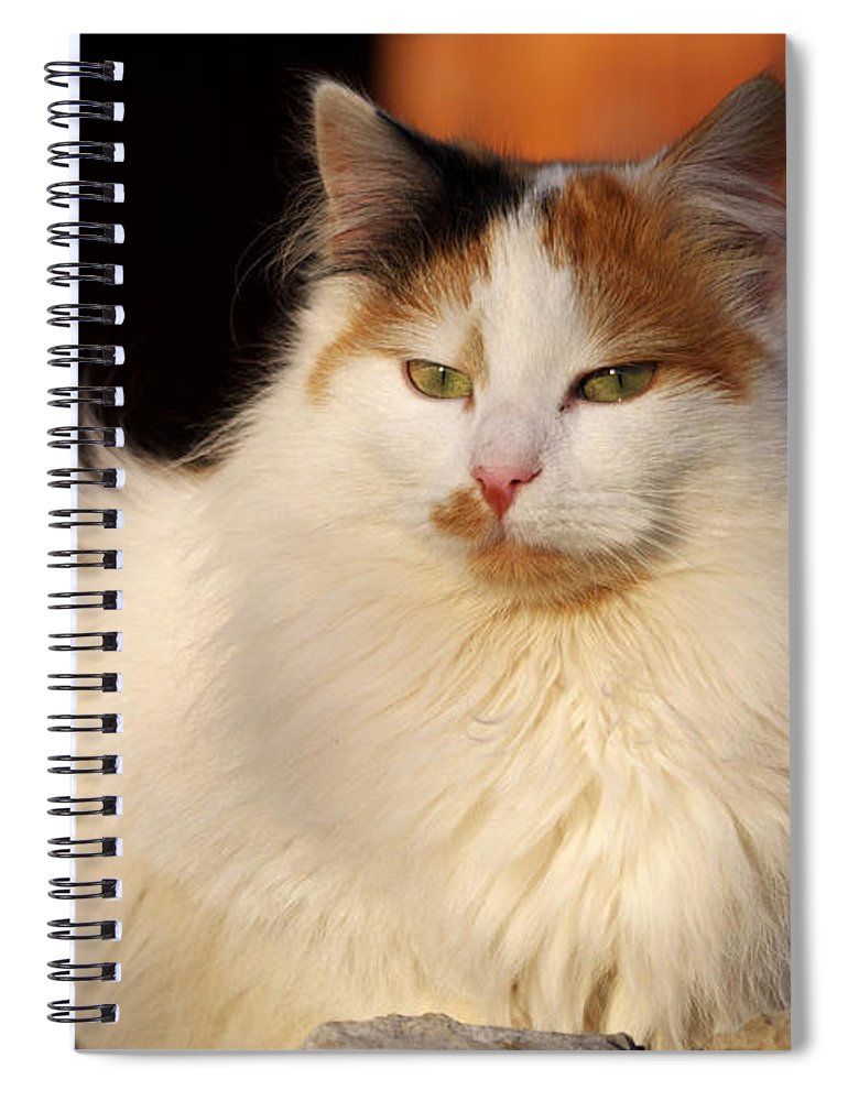 Cat Spiral Notebook featuring the photograph King Of The Backyard by Ivan Slosar