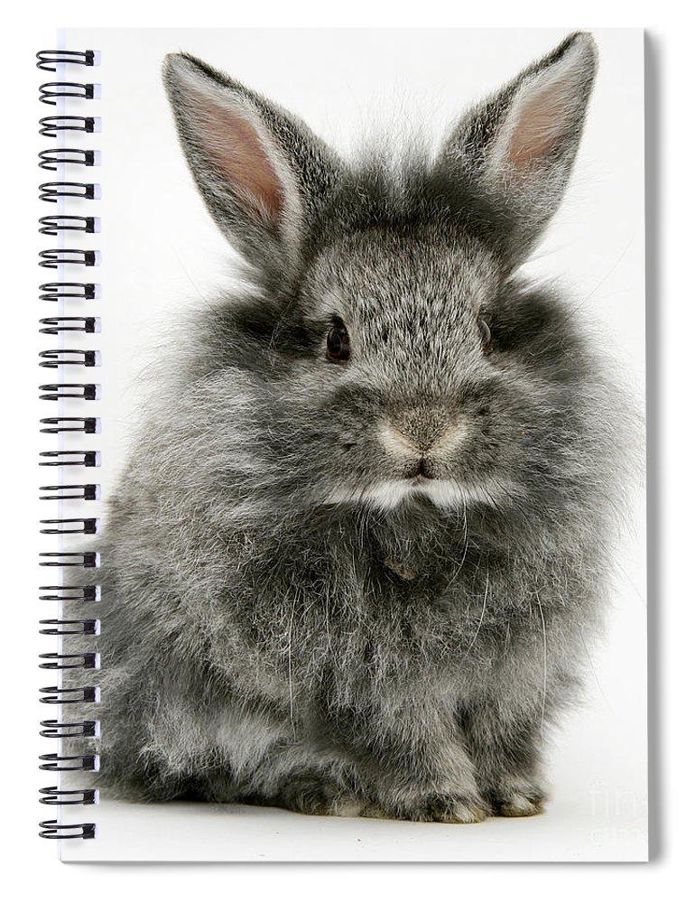 Animal Spiral Notebook featuring the photograph Lionhead Rabbit by Jane Burton