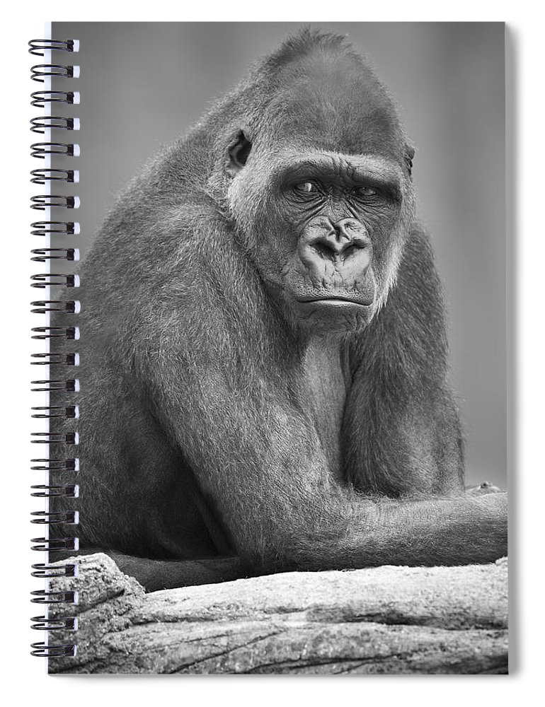 Outdoors Spiral Notebook featuring the photograph Monkey by Darren Greenwood