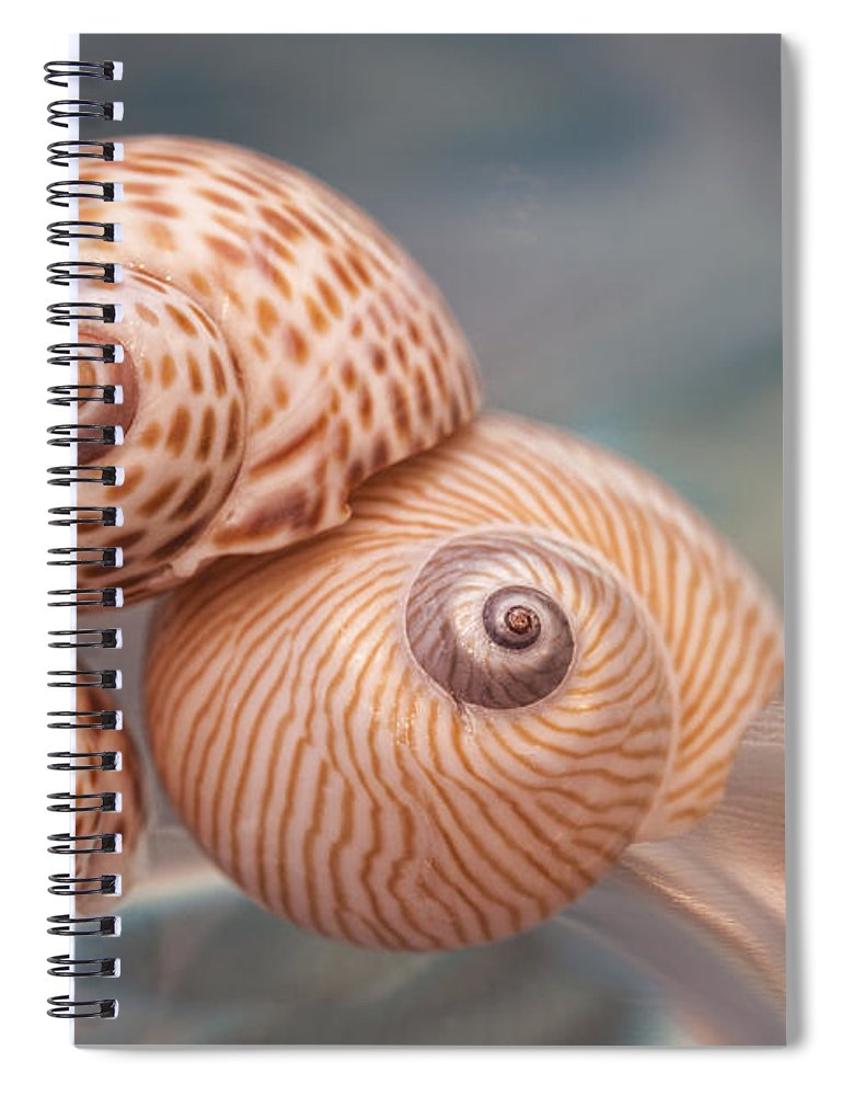 Moon Spiral Notebook featuring the photograph Moon Shells by Carol Leigh