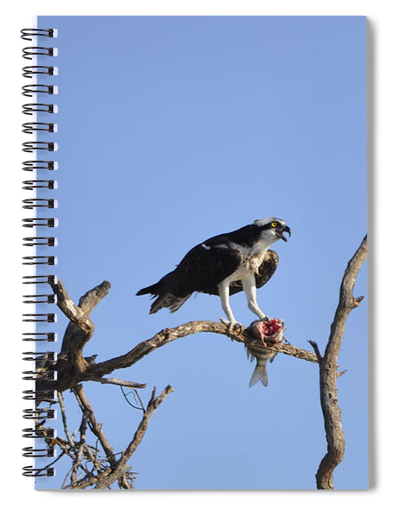Osprey Spiral Notebook featuring the photograph Osprey with Catch I by Christine Stonebridge