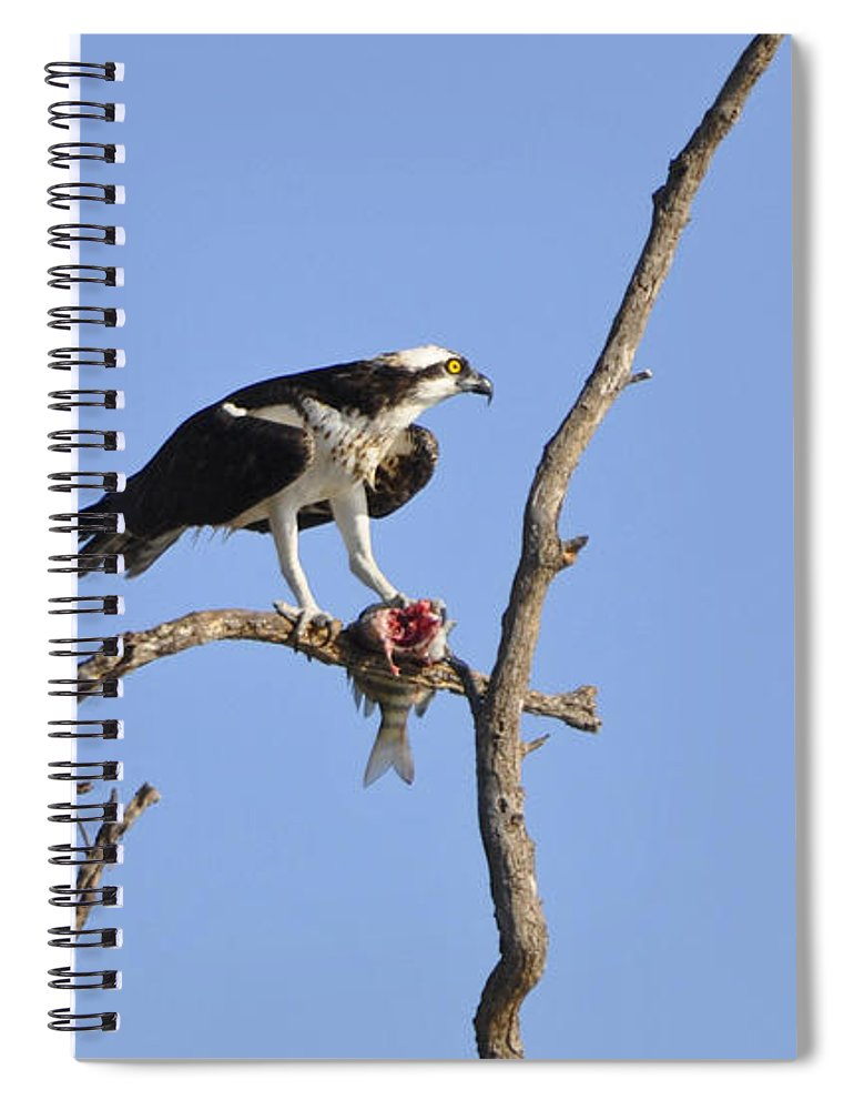 Osprey Spiral Notebook featuring the photograph Osprey with Catch II by Christine Stonebridge