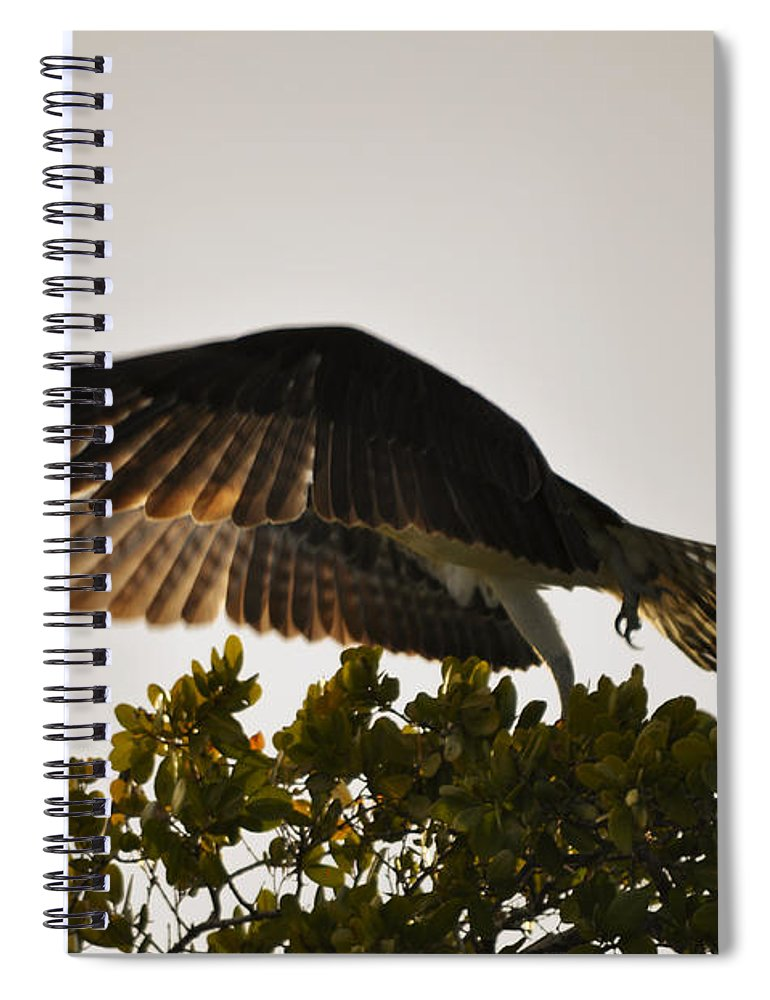 Osprey Taking Flight Spiral Notebook featuring the photograph Poetry in Motion by Christine Stonebridge