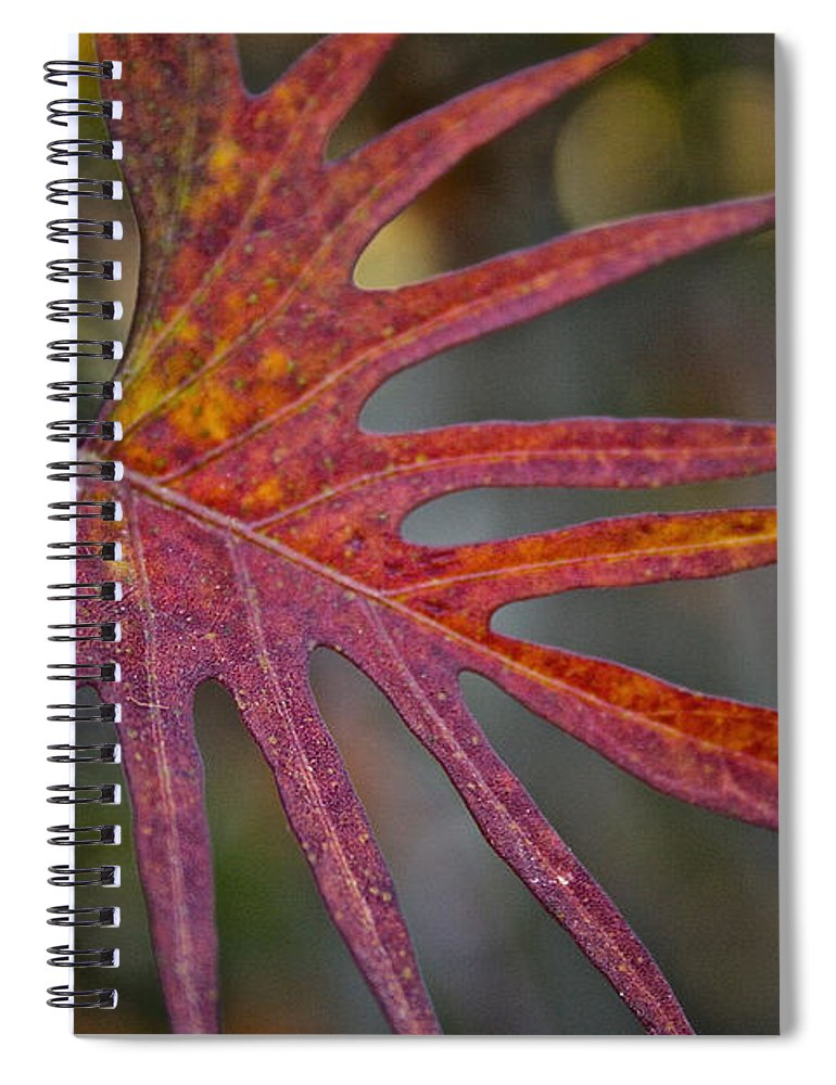 Outdoors Spiral Notebook featuring the photograph Pointedly by Susan Herber