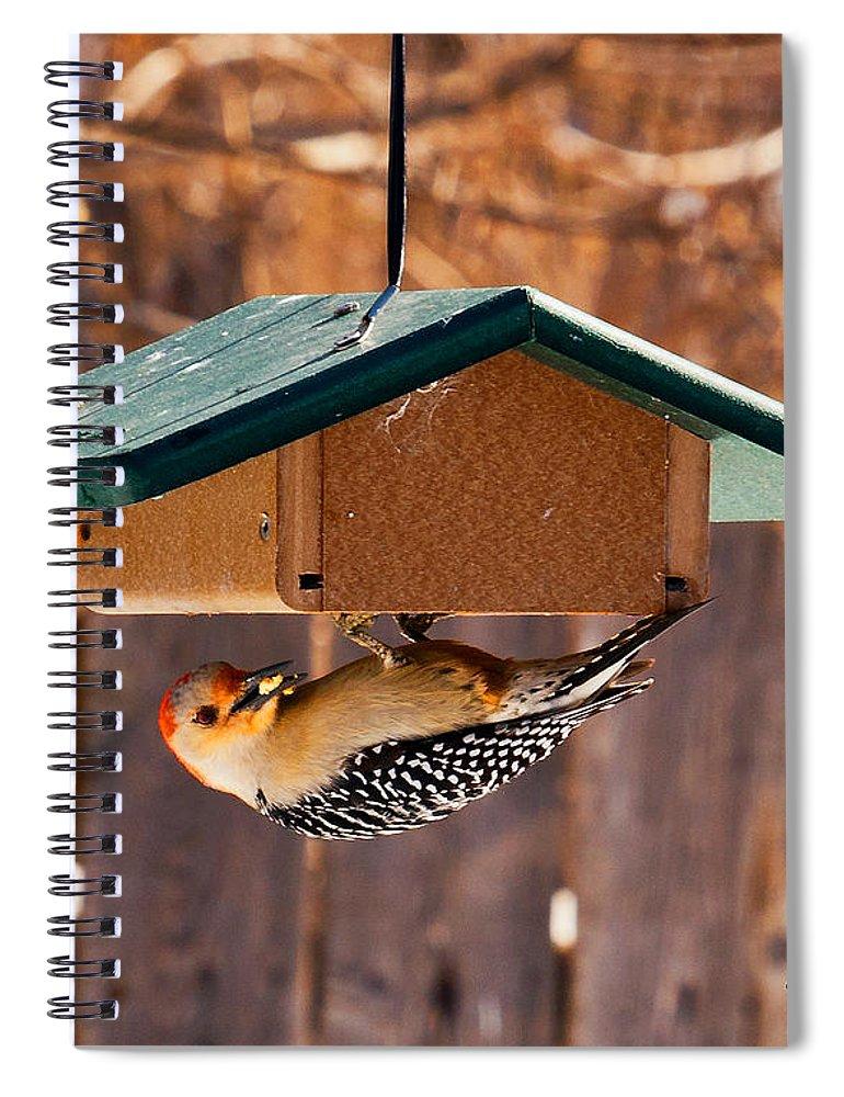 Red-bellied Woodpecker Spiral Notebook featuring the photograph Red-bellied Woodpecker At Lunch by Edward Peterson