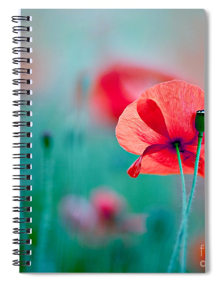 Poppy Spiral Notebook featuring the photograph Red Corn Poppy Flowers 04 by Nailia Schwarz