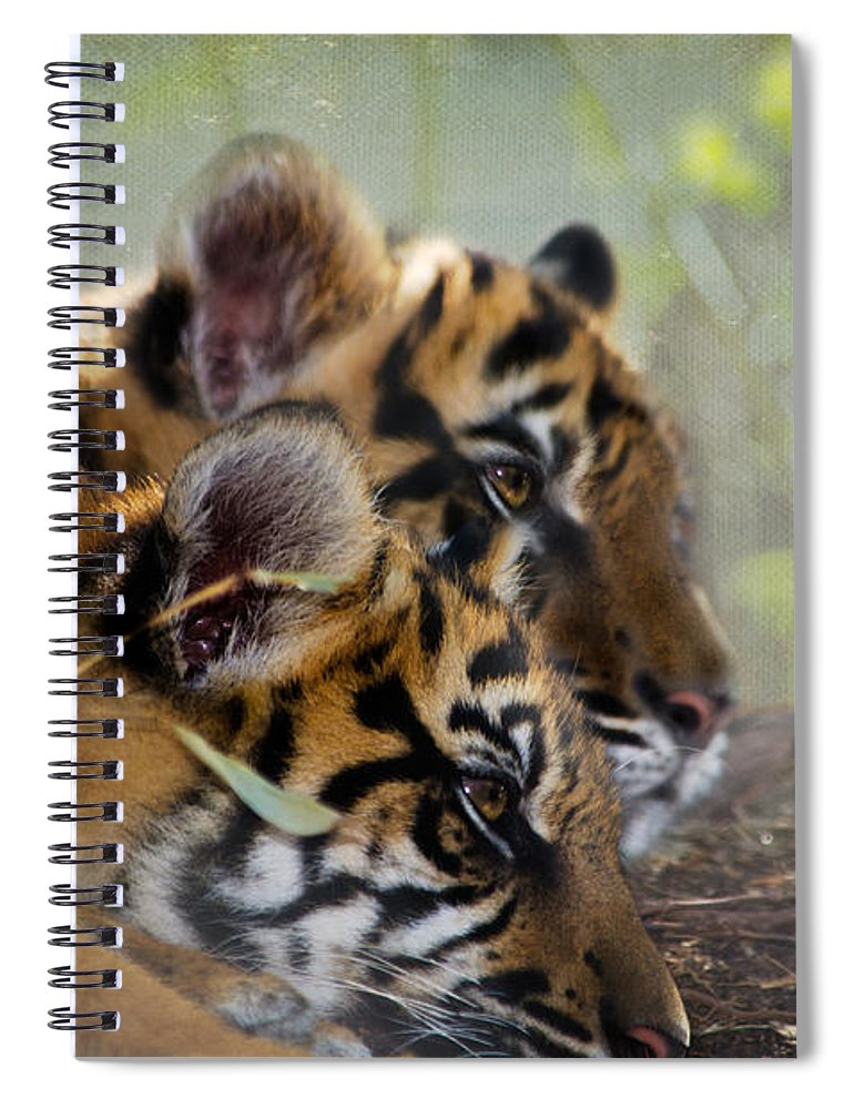 Samatran Tiger Spiral Notebook featuring the photograph Samatran Tiger Cubs by Betty LaRue