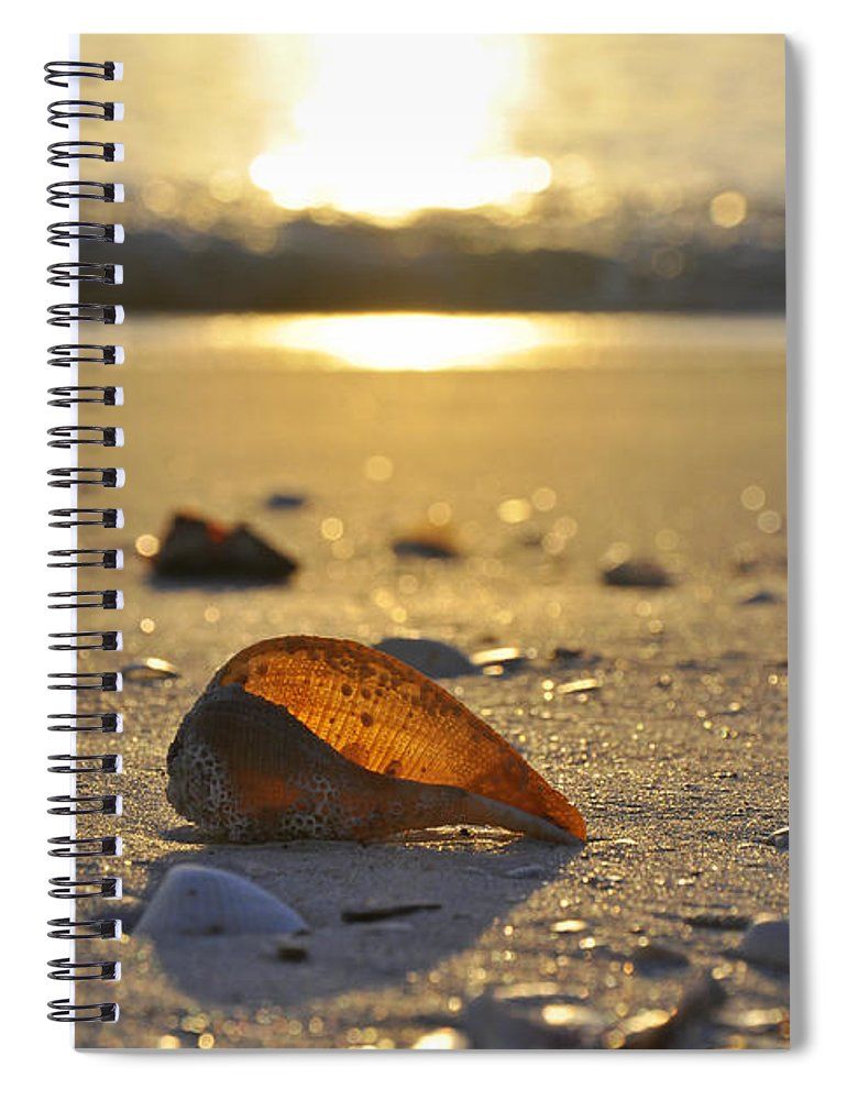 Sea Shell Spiral Notebook featuring the photograph Seashells and Sunshine by Christine Stonebridge