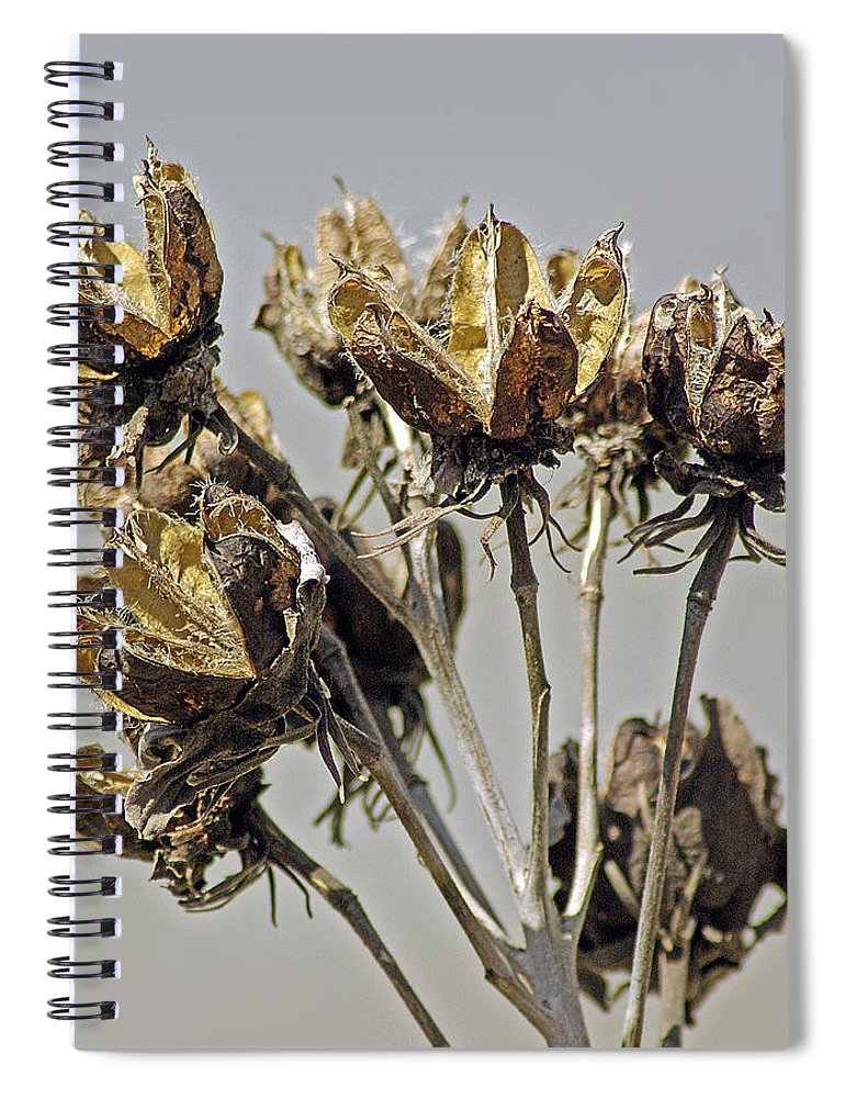 2d Spiral Notebook featuring the photograph Seed Pods by Brian Wallace