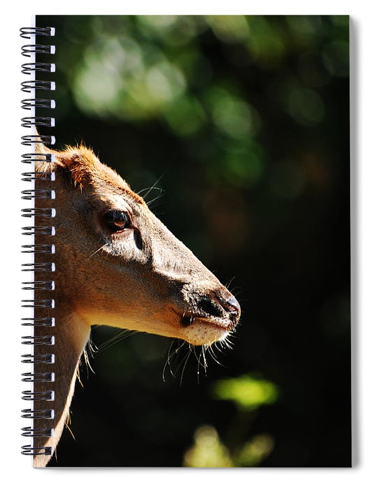 Deer Spiral Notebook featuring the photograph Sunshine Daydream by Lori Tambakis