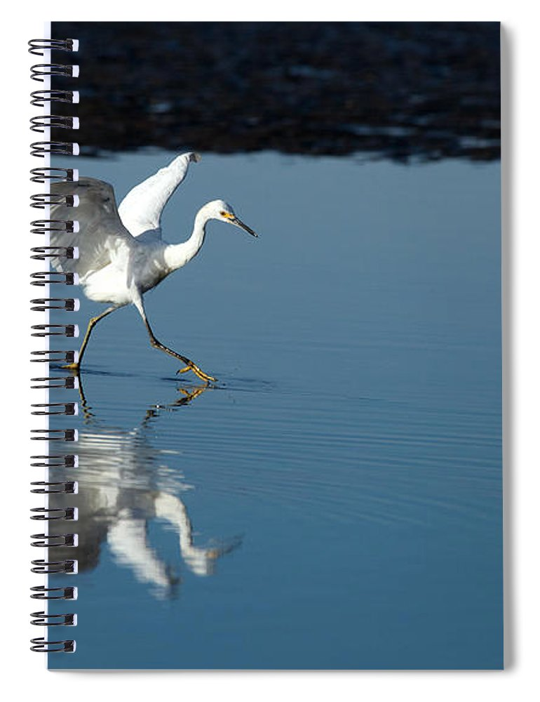 Egret Spiral Notebook featuring the photograph Walking On Water by Karol Livote