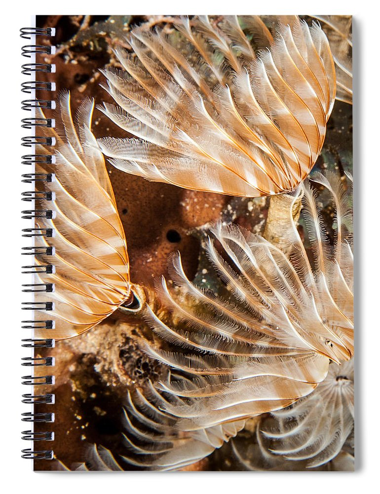 Belize Spiral Notebook featuring the photograph Waving In The Current by Jean Noren