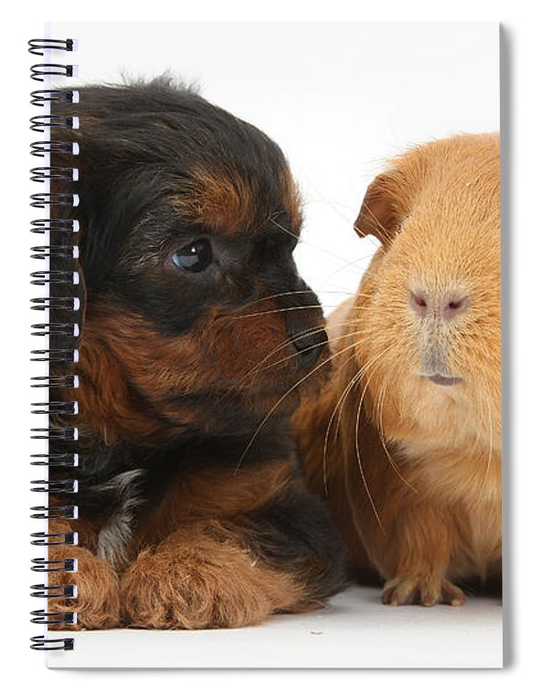 Nature Spiral Notebook featuring the photograph Yorkipoo Pup With Guinea Pig by Mark Taylor