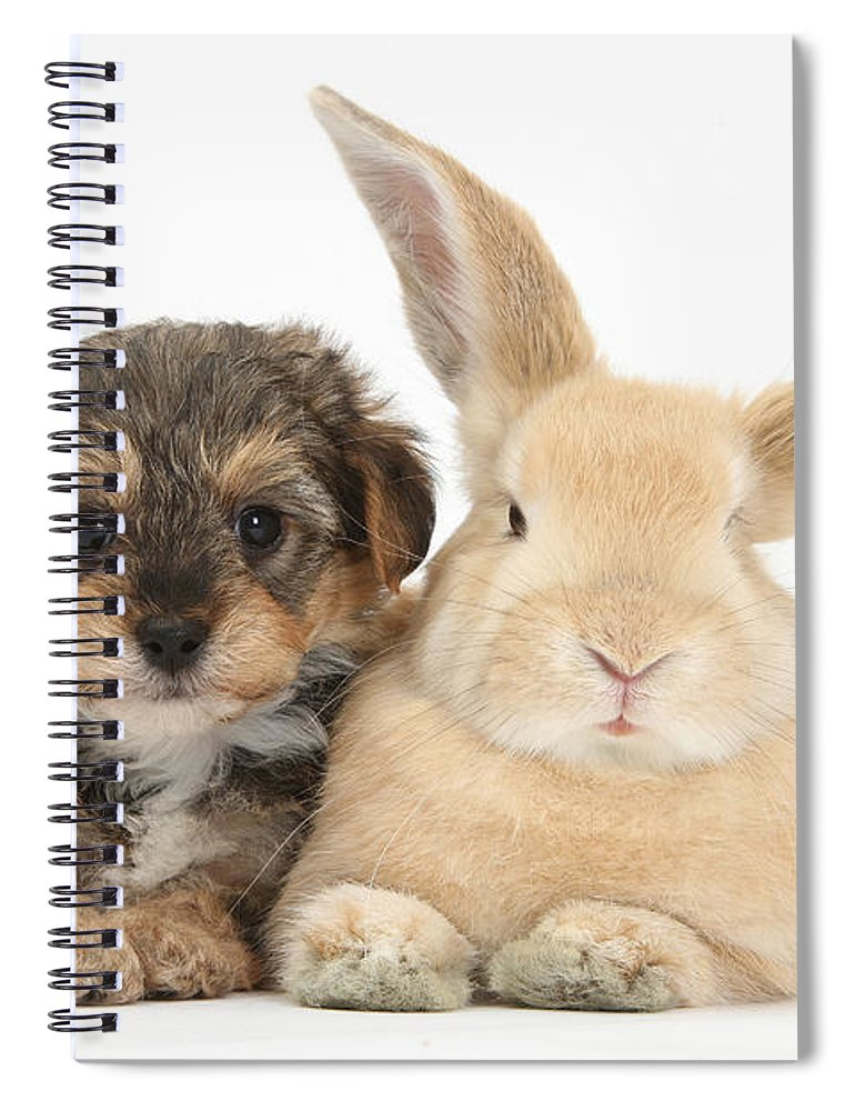 Nature Spiral Notebook featuring the photograph Yorkipoo Pup With Sandy Rabbit by Mark Taylor