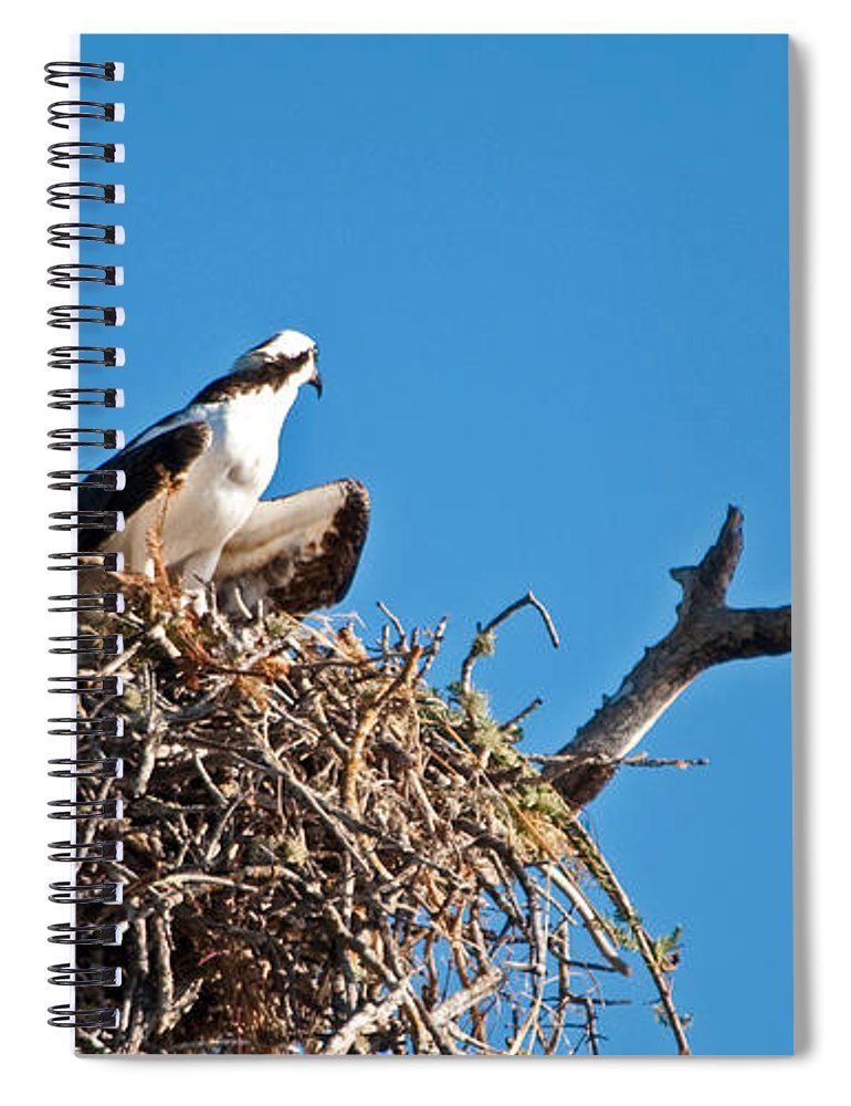 Osprey Spiral Notebook featuring the photograph You Lookin At Me by Christine Stonebridge