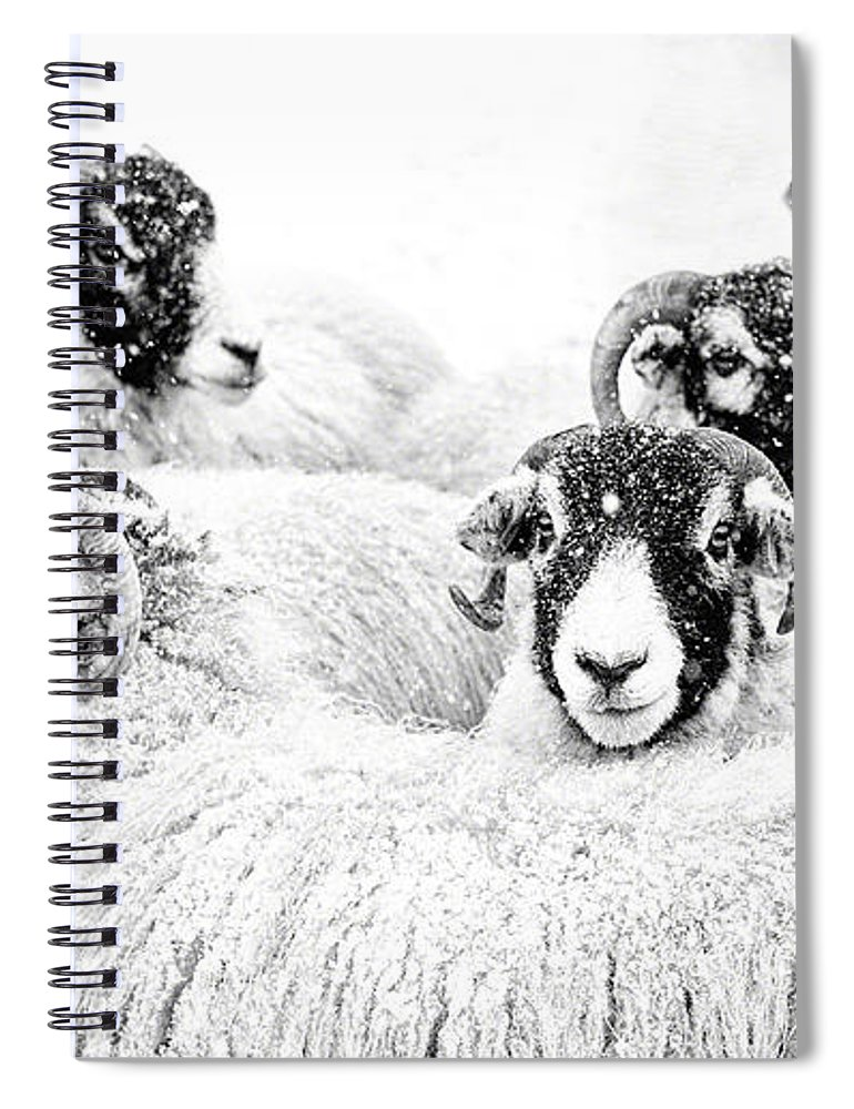 Swaledale Spiral Notebook featuring the photograph In Winters Grip by Janet Burdon