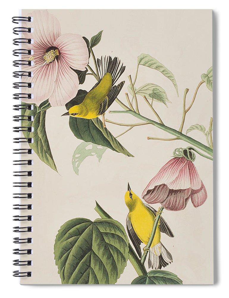 Blue-winged Yellow Warbler Spiral Notebook featuring the painting Blue-winged Yellow Warbler by John James Audubon