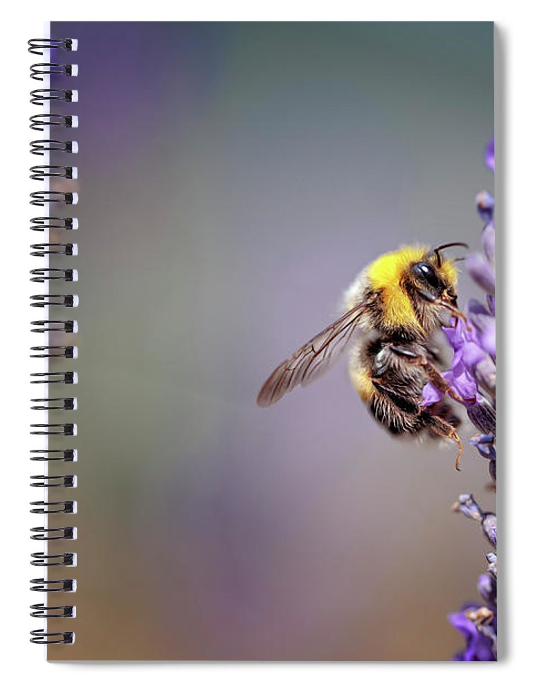 Lavender Spiral Notebook featuring the photograph Bumblebee and Lavender by Nailia Schwarz