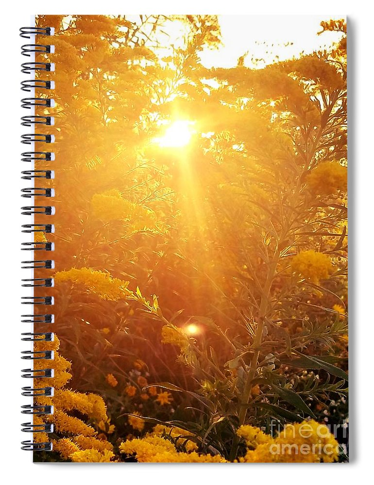 Golden Days Of Autumn Spiral Notebook featuring the photograph Golden Days Of Autumn by Maria Urso