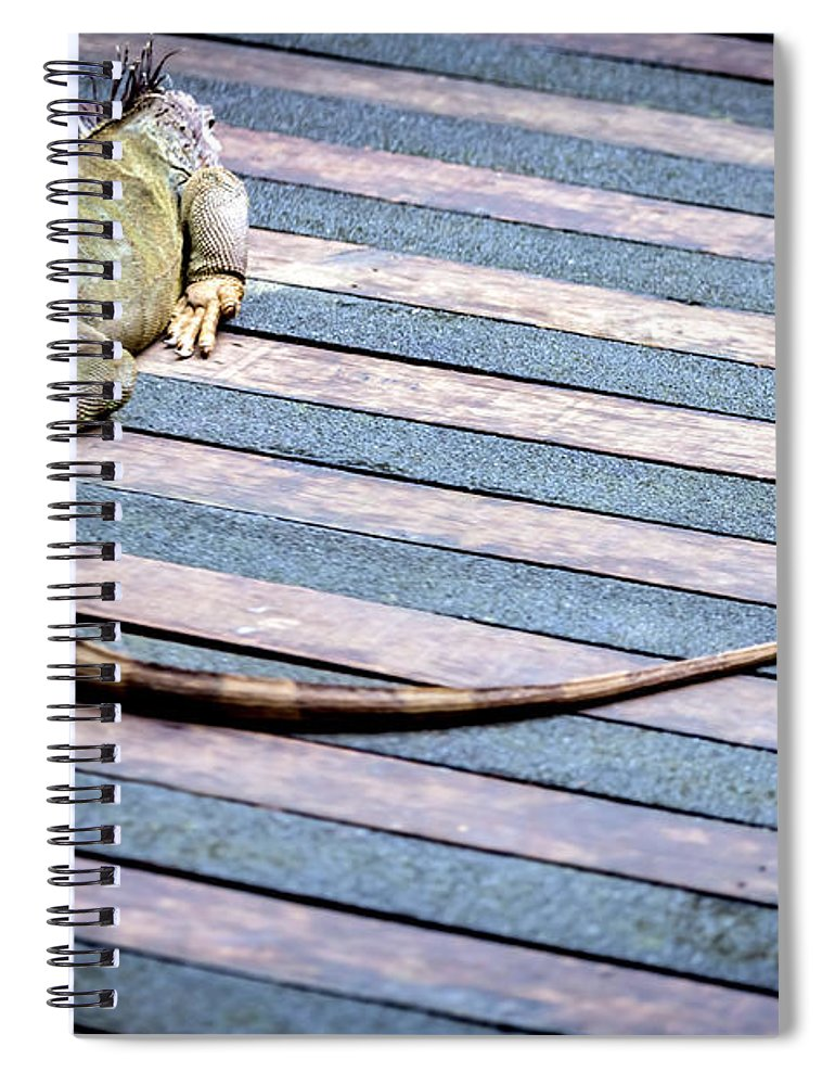 Green Iguana Spiral Notebook featuring the photograph Green Iguana by Jijo George