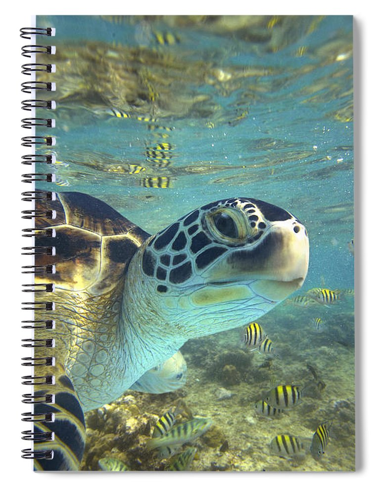 00451417 Spiral Notebook featuring the photograph Green Sea Turtle Balicasag Island by Tim Fitzharris