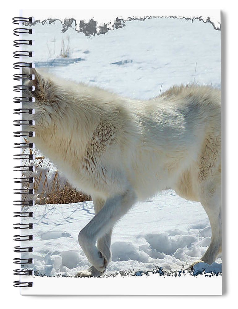 Lone White Wolf Spiral Notebook featuring the photograph Lone White Wolf by OLena Art Brand